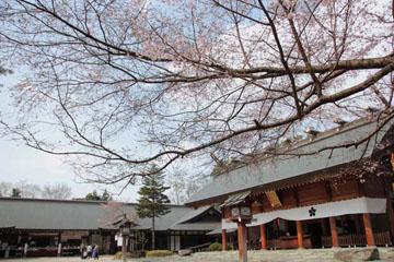サクラ舞う神社